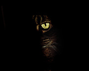 Andee Photography - Hidden Kitty Under The Cover Of Darkness